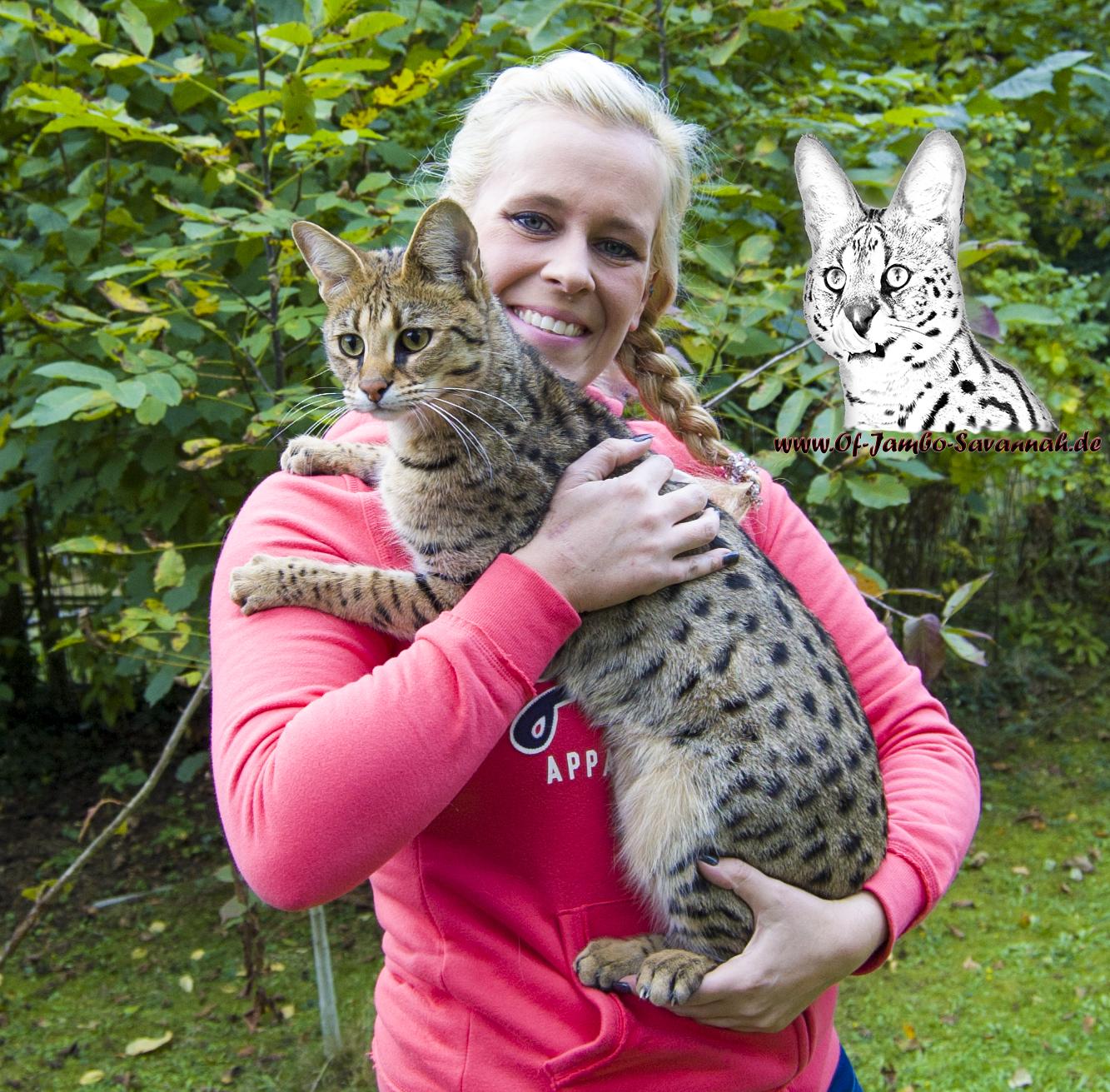Savannahcat, Savannahkatze, Savannahbreeder, Catbreeder, Savannahzucht, Angela Hönig