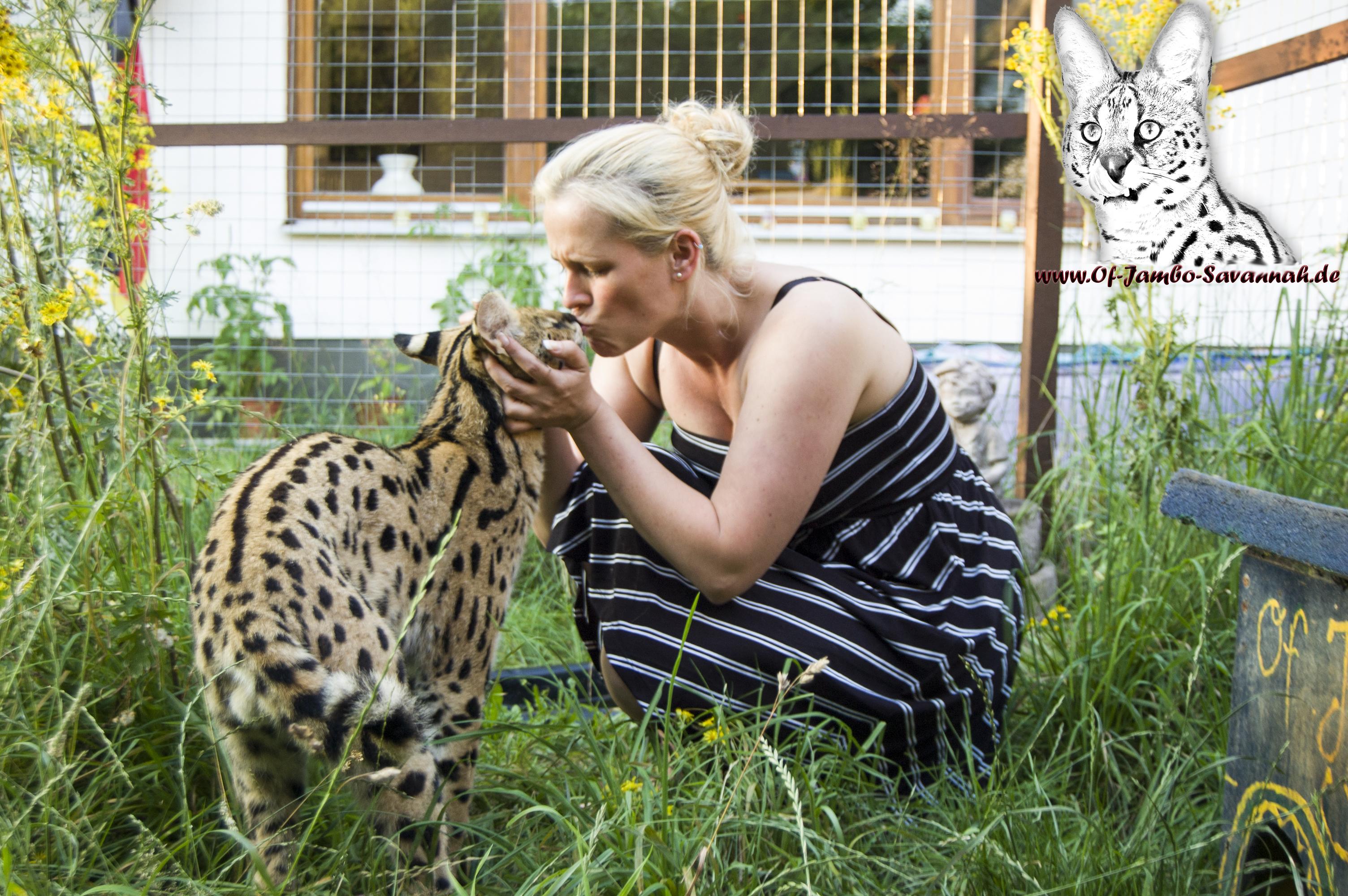 Angela Hönig und Ihr zahmer afrikanischer Serval Thor