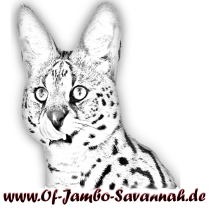 LOGO OF JAMBO SAVANNAH