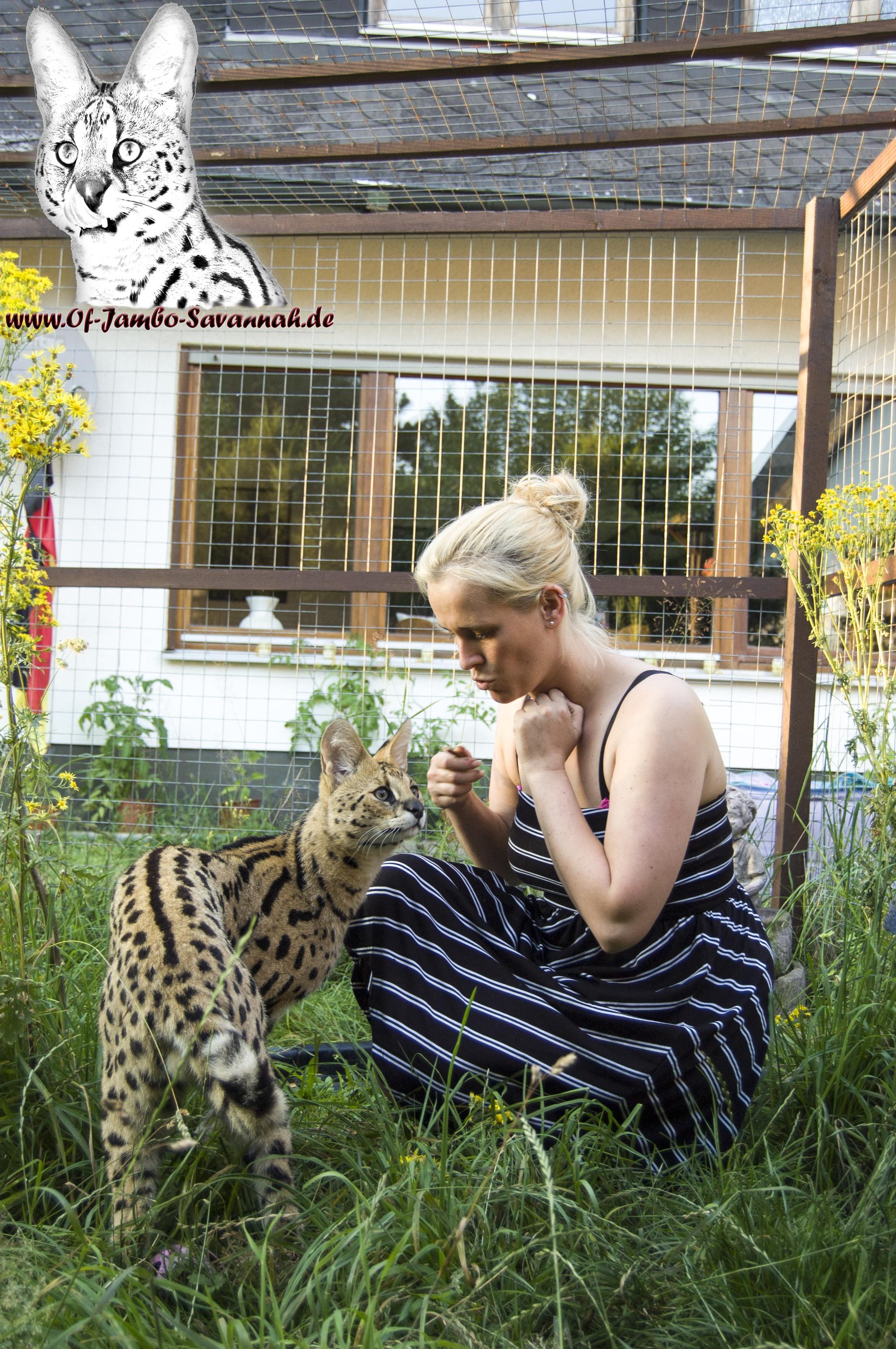 """Angela Hönig mit Ihrem Serval """"Thor"""". Der Ist der Stolz der Savannahzucht """"Of Jambo Savannah"""""""