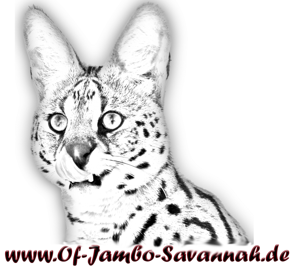 German Savannah Cat Breed.