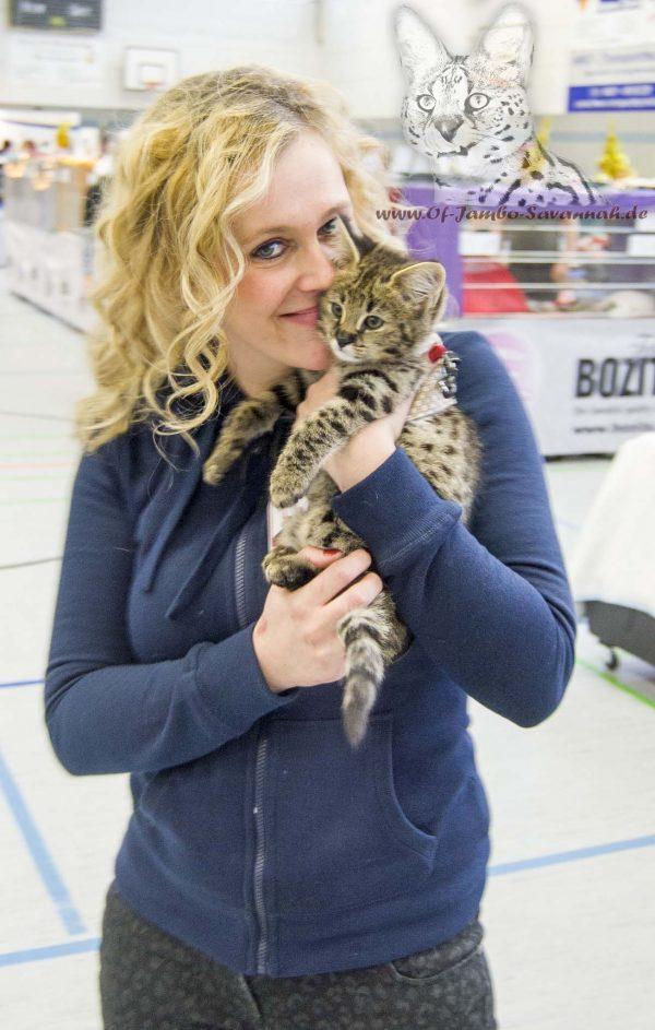 F1 Savannah Kitten auf dem Arm von Angela Hönig. Savannahzüchterin aus Deutschland
