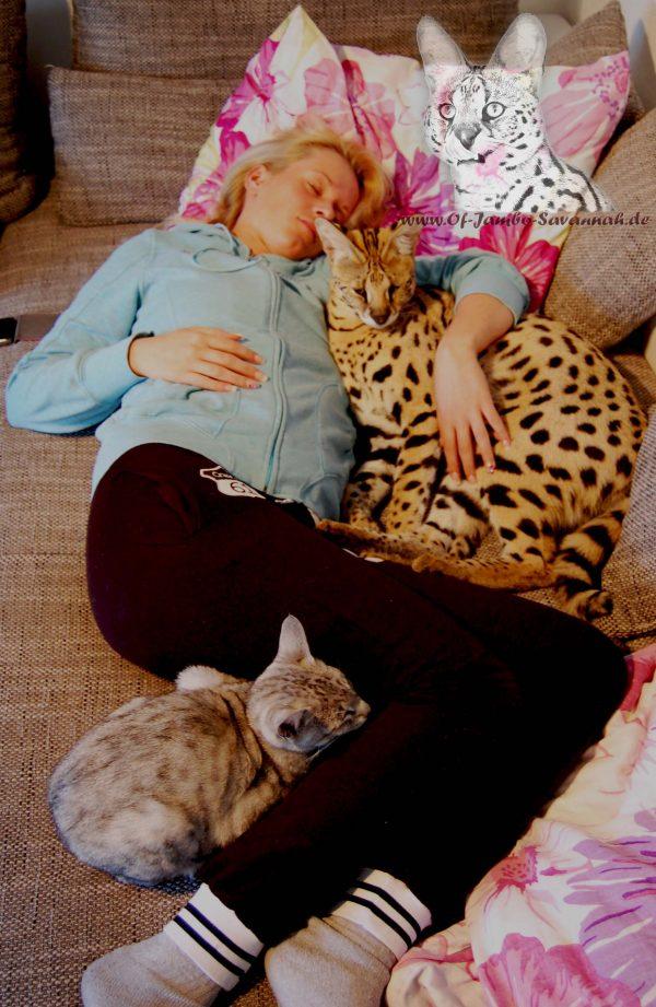 Züchteralltag, Angela Hönig mit Serval Thor und einer Savannah Dame auf der Couch.