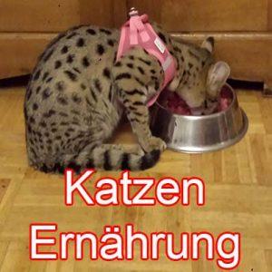 Katzenernährung, B.A.R.F bei Katzen, Sollte man Katzen barfen?