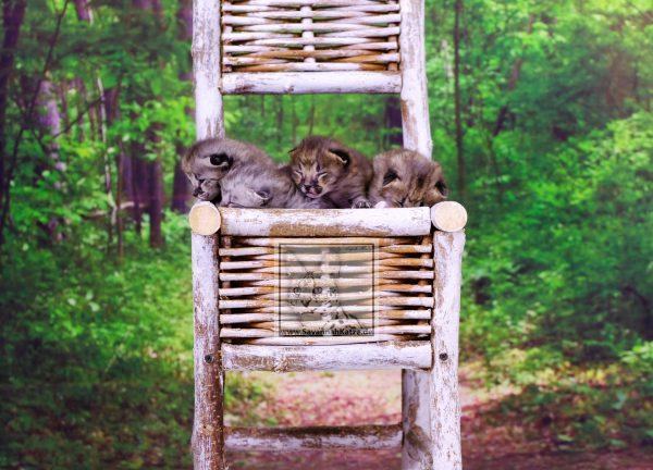 Wunderschöne F1 Savannah Kitten suchen neues zu Hause.