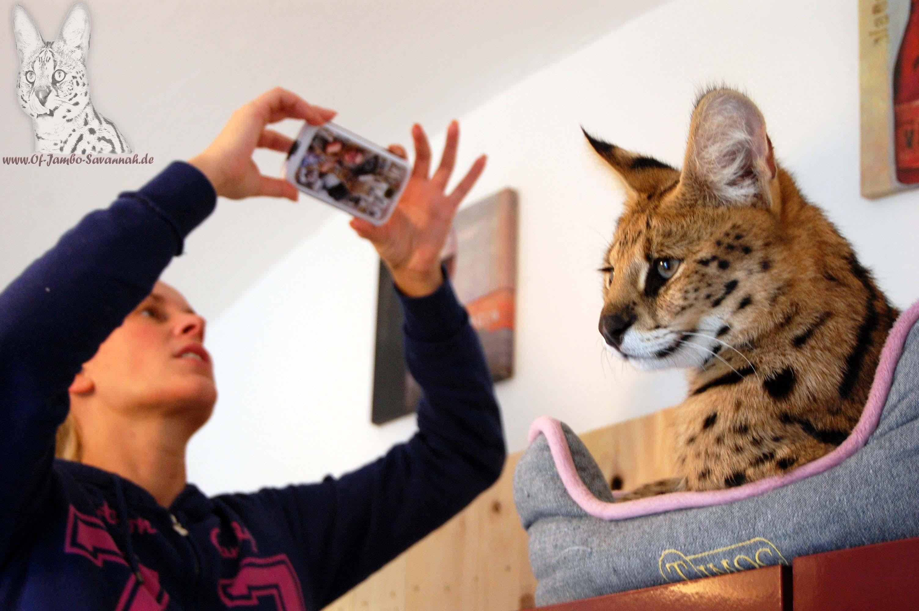 """Angela Hönig macht ein Bild von Ihrem Serval """"Thor"""""""