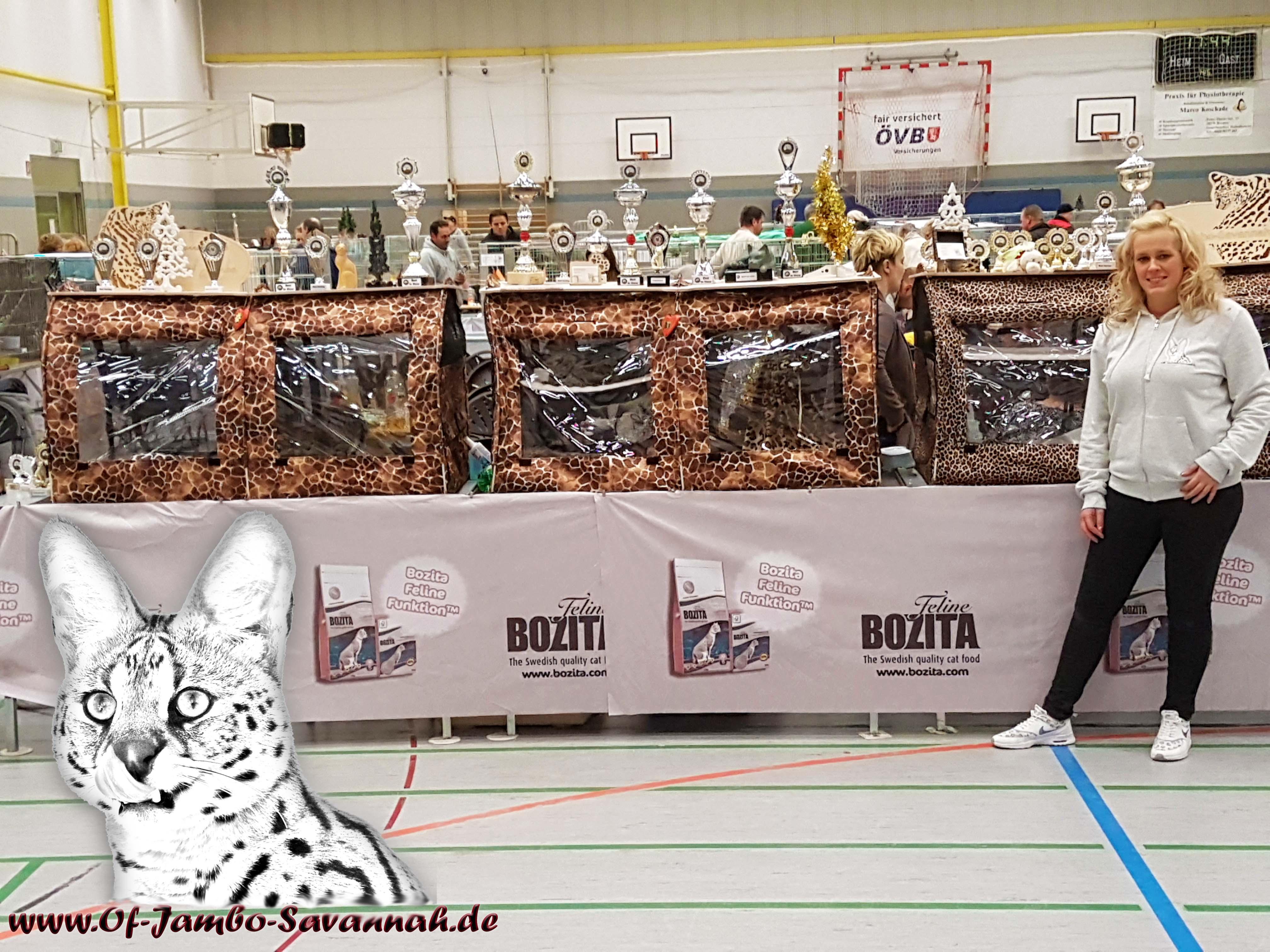 Felidae e.V. Internationale Katzenausstellung in Bremen. Savannah Sonderschau, Elli of Jambo wir beste Savannah der Ausstellung